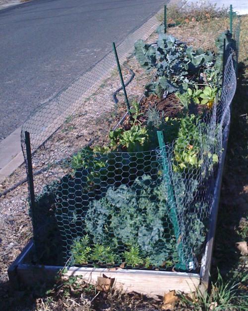 frontyard_garden
